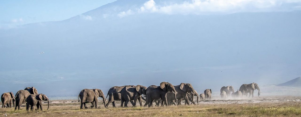 amboseli-elephants-kilimanjaro-backdrop