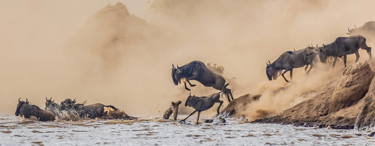 The Annual Great Wildebeest Migration in East Africa