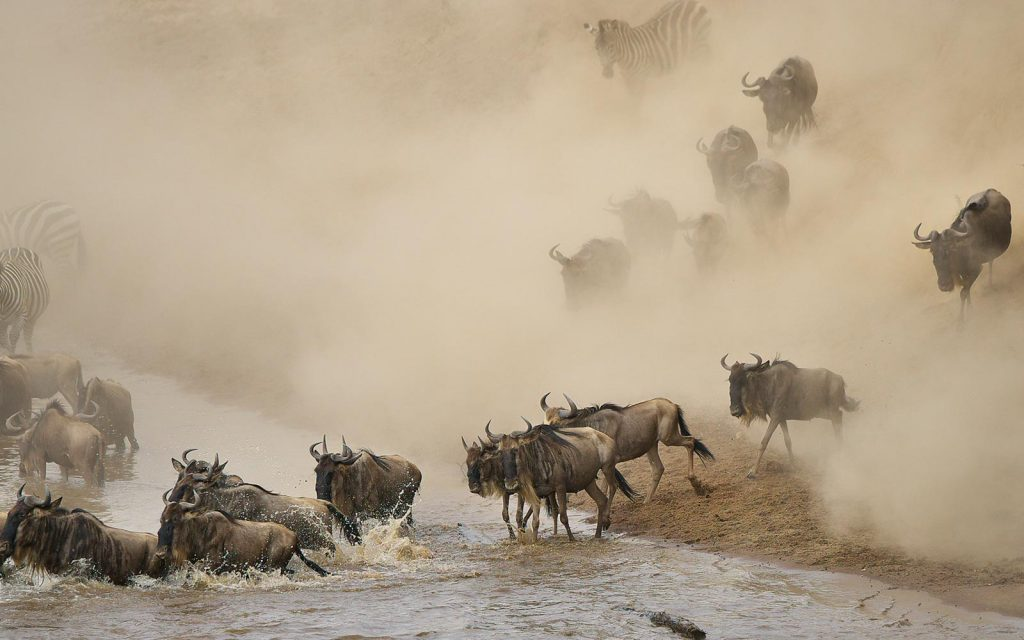 East Africa's great migration safari drive
