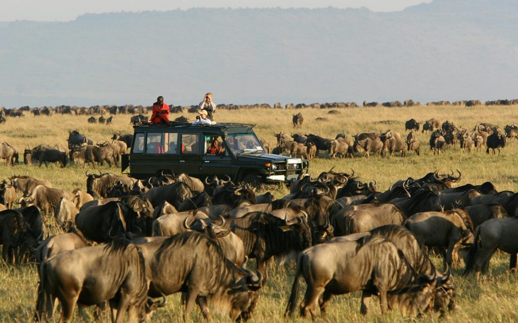 The great migration game drive in mara