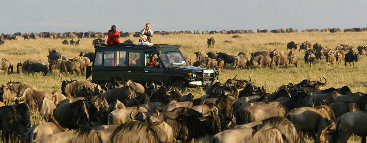 Mara, Nakuru & Amboseli Africa Safari