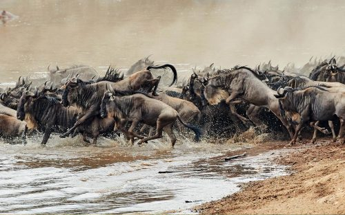 Masai Mara Migration Weekend (budget)