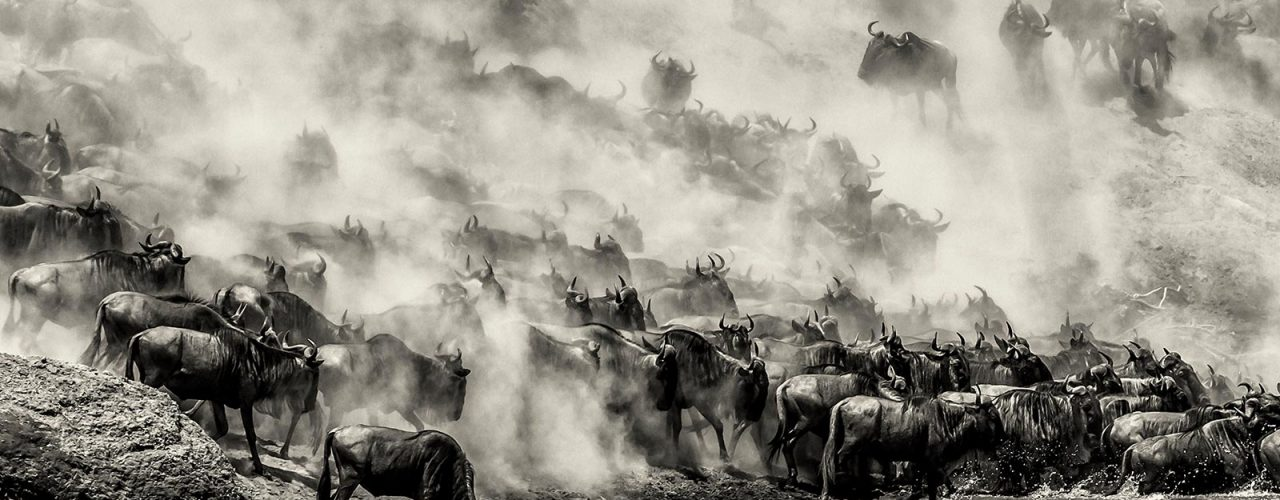 The great migration safaris, gorilla tours and wildlife holidays