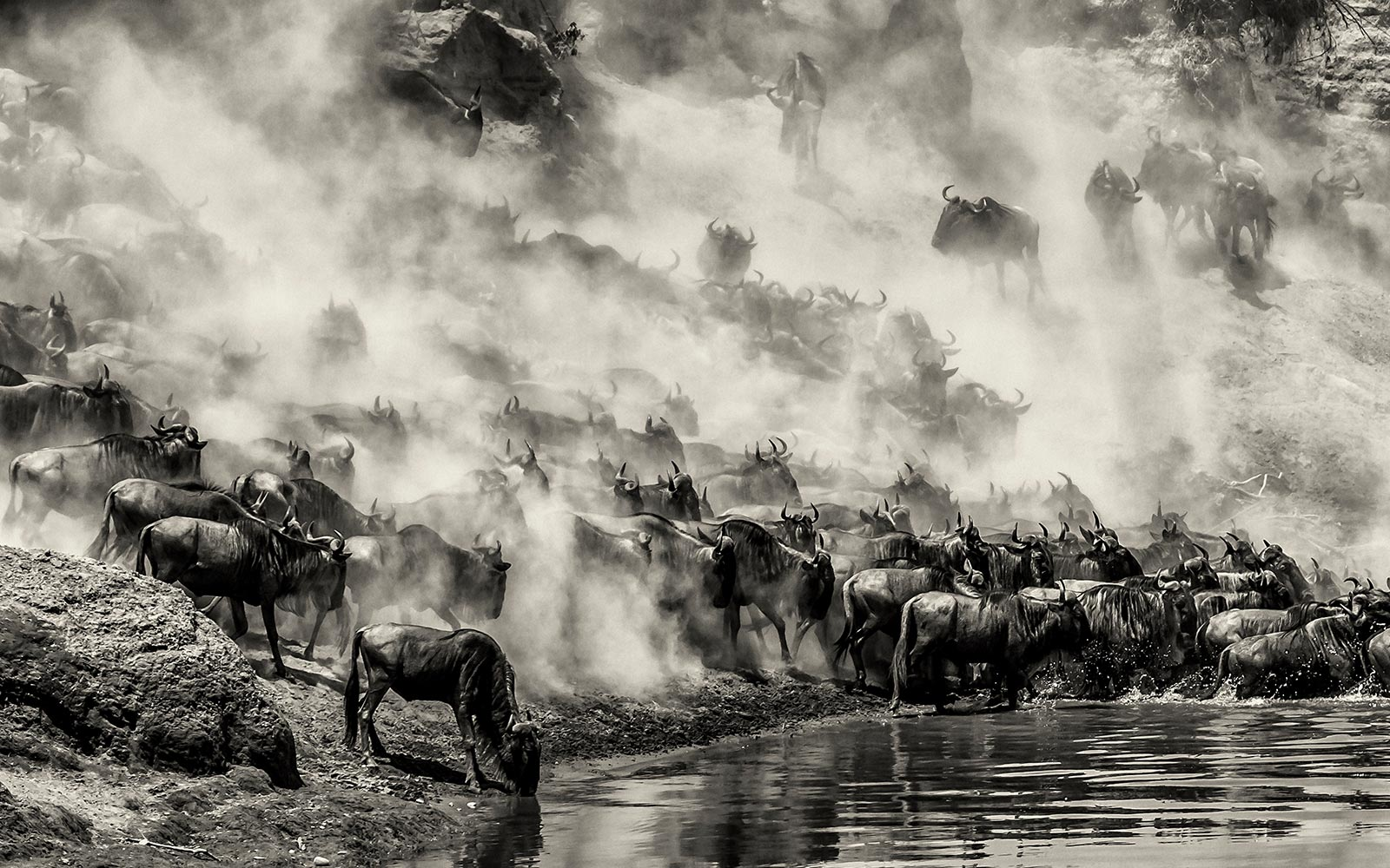 The great Wildebeest migration safari