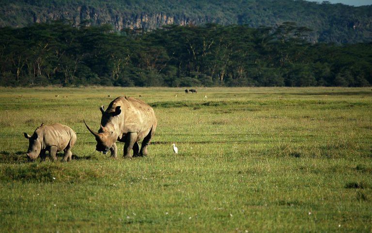 Wildlife viewing in nakuru National Park