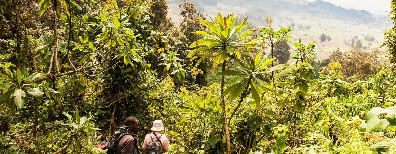 rwanda-gorilla-volcanoes-hiking