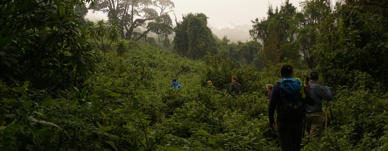 rwanda-gorilla-volcanoes-trekking