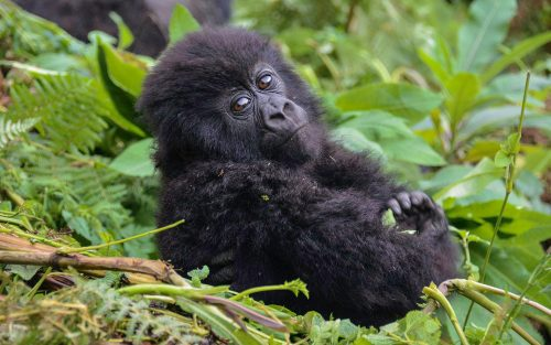 Gorillas, Nile Source & Mara Africa Adventure