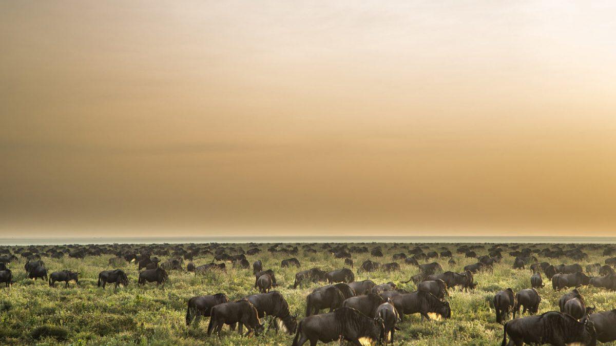 Tanzania's Serengeti National Park