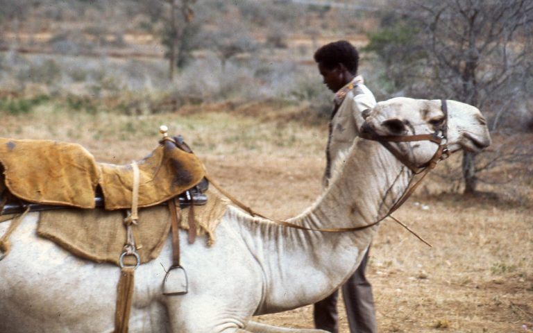 Camel & Horse Riding Safaris