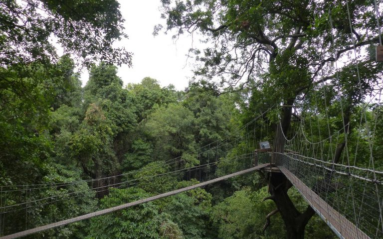 Lake Manyara Canopy walks