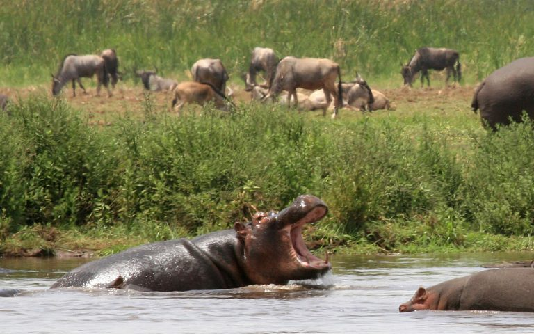 Hippo View Point in Manyara