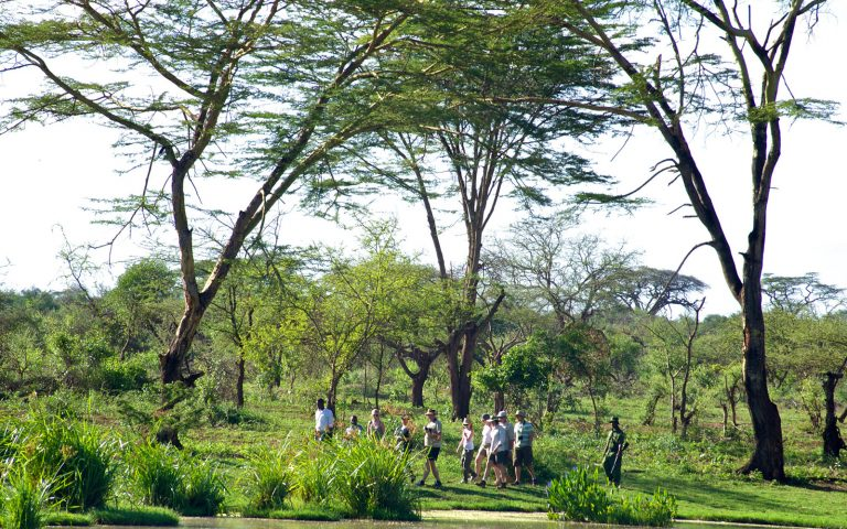 Guided Bush Walks in Tsavo NP