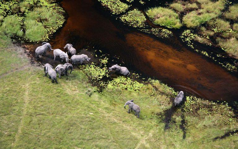 Air Safaris in Chobe