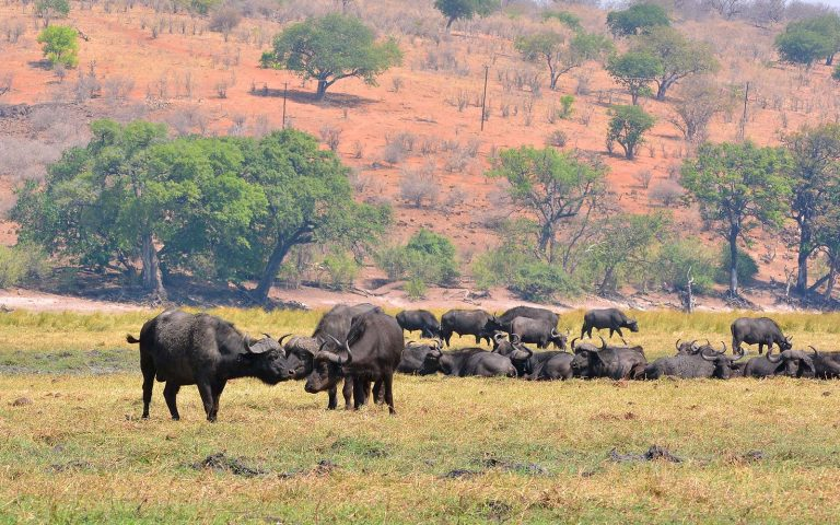 Wildlife Viewing in chobe national park