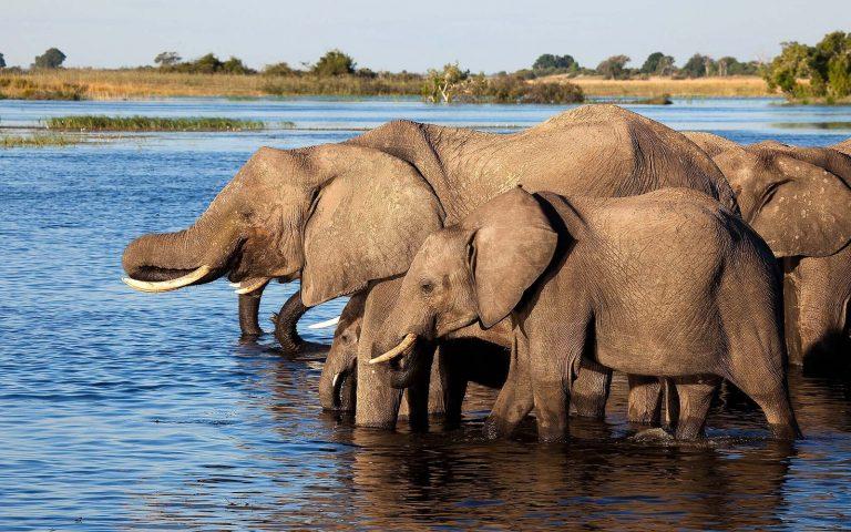 River Chobe Botswana