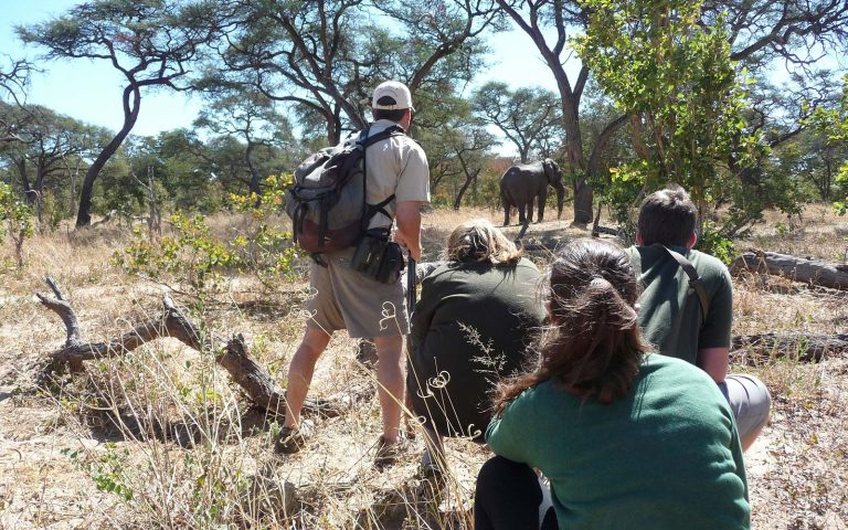 Guided Bushwalk Safari in Hwange