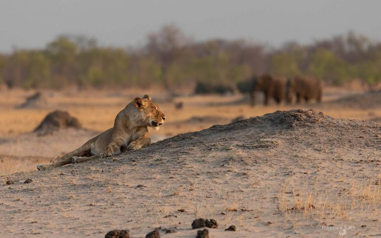 Game Drives in Hwange NP
