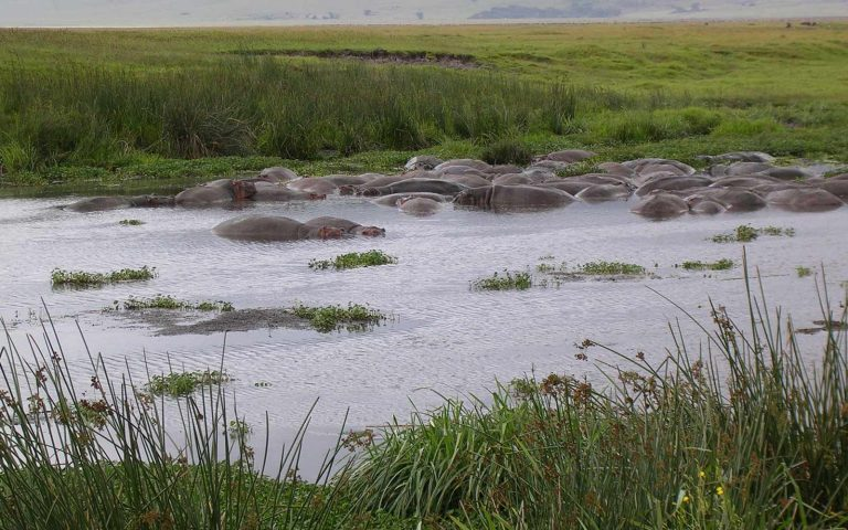 ngorongoro crater conservation area_