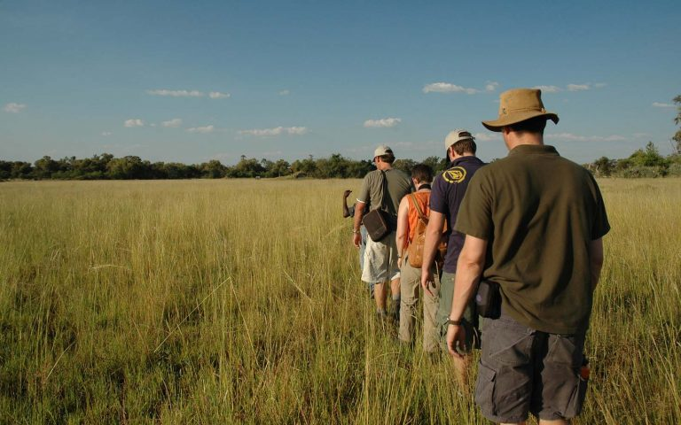 Nature Walks in Okavango