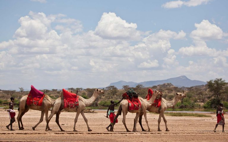Camel and horse riding in the private ranches