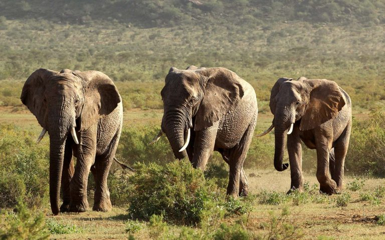 lake manyara national park - Family Wildlife Game Drives