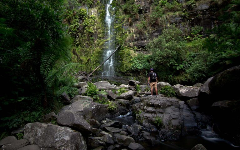 Victoria Falls Rainforest Facts