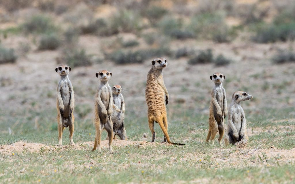 Self Game Drives in Kgalagadi