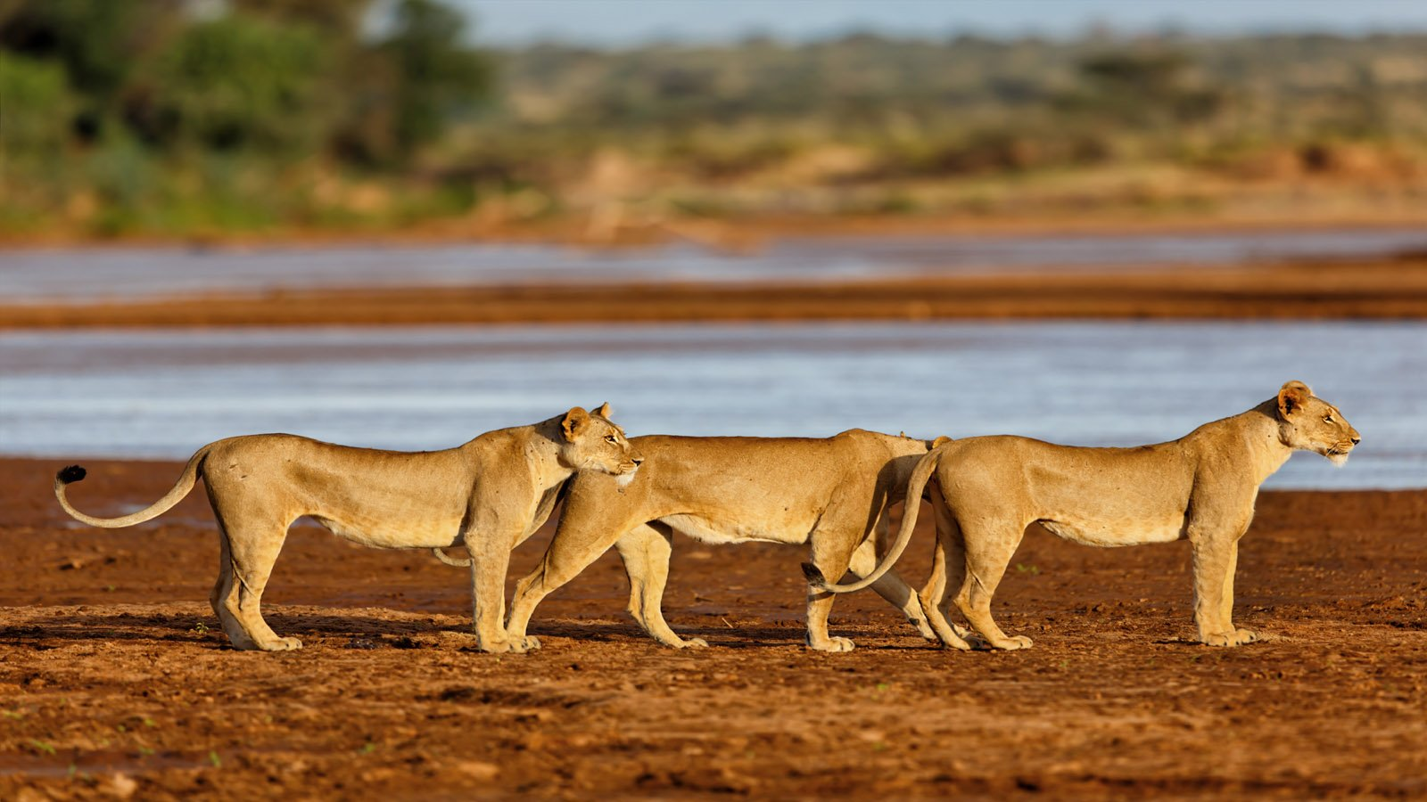 4 Days Wildlife Viewing in Masai Mara