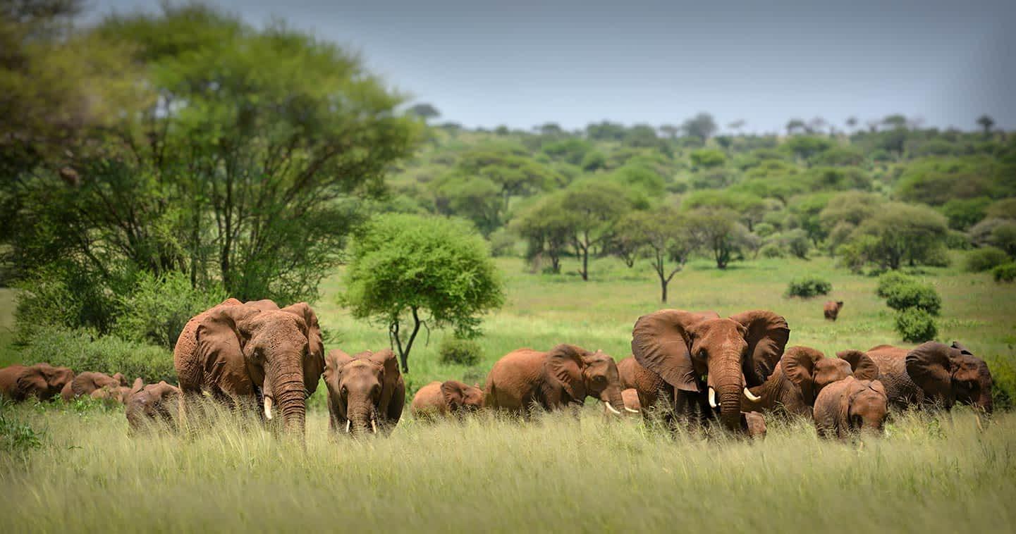 4 Days Wildlife Viewing in Serengeti National Park & Ngorongoro Crater.